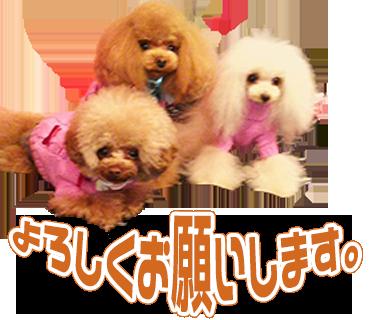 coco,miL,loveちゃんのLINEスタンプ