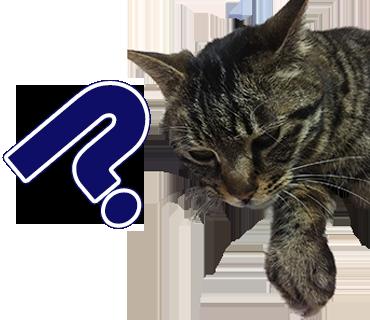 E.O様猫ちゃんのLINEスタンプ