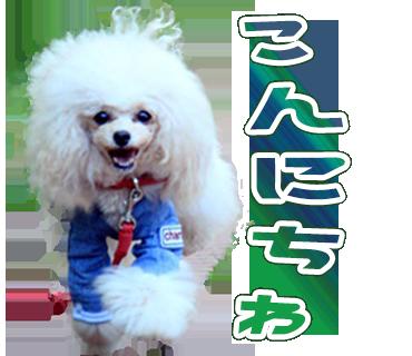 K.N様わんちゃんのオリジナルLINEスタンプ