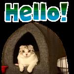 K様猫ちゃんのLINEスタンプ