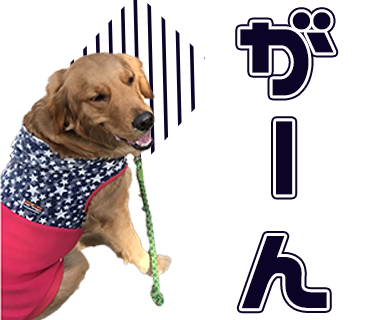 TN様の愛犬のLINEスタンプ