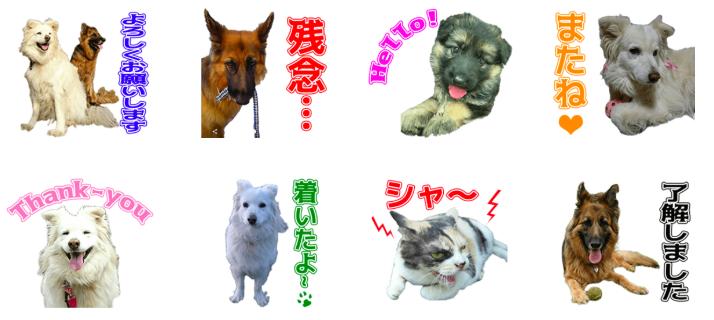 保護犬ケープちゃんとシェパードのわらびちゃんのオリジナルLINEスタンプ