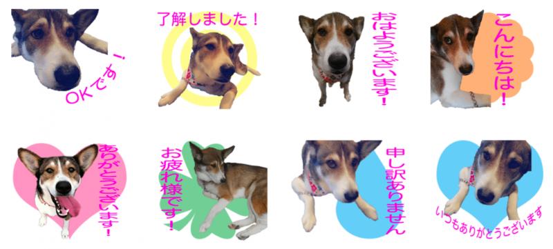 カフェハン看板犬モモちゃんのオリジナルLINEスタンプ制作