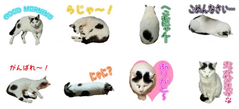 猫のみこちゃんのオリジナルLINEスタンプスタンプ制作