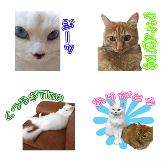 ミミィちゃんと後輩猫ちゃんのオリジナルLINEスタンプ制作