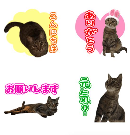 TORAちゃんのオリジナルLINEスタンプ制作