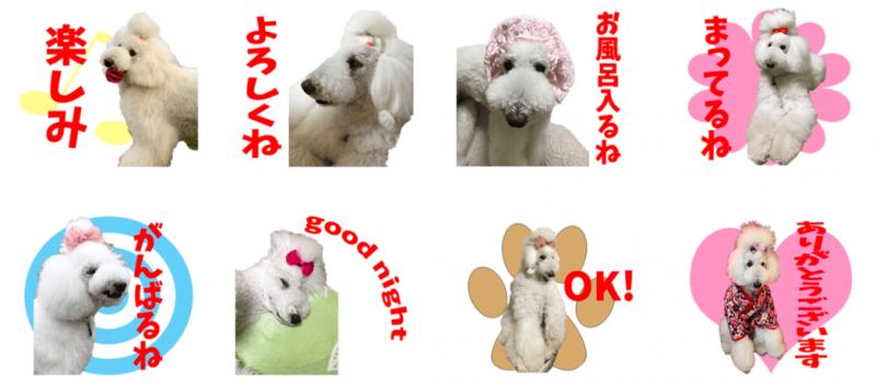 白犬ちゃんのオリジナルLINEスタンプ制作