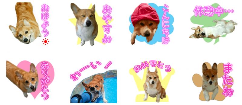 コーギー犬ちきちゃんのオリジナルLINEスタンプ