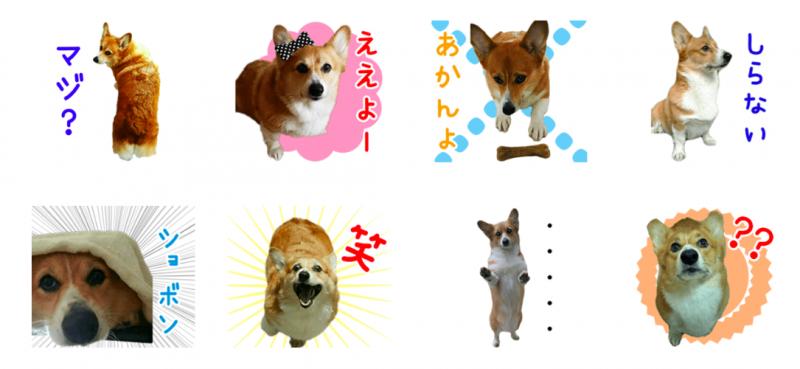 コーギー犬ちきちゃん第2弾オリジナルLINEスタンプ制作