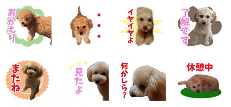 我が家のアイドルちゃんのオリジナルLINEスタンプ制作3