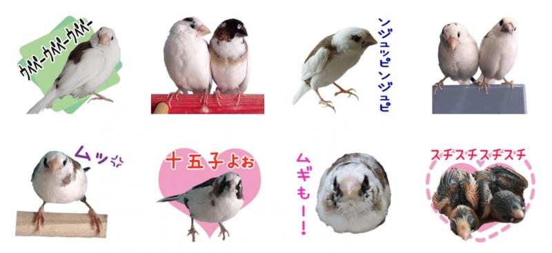 シマ鳥さんちの鳥達のオリジナルLINEスタンプ制作