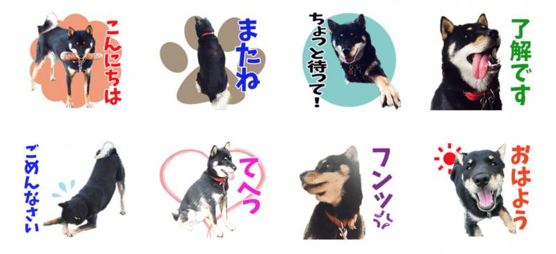 北海道犬の風ちゃんのオリジナルLINEスタンプ制作