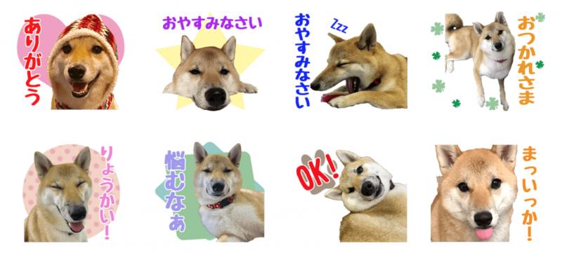 柴犬はるちゃんのオリジナルLINEスタンプ制作