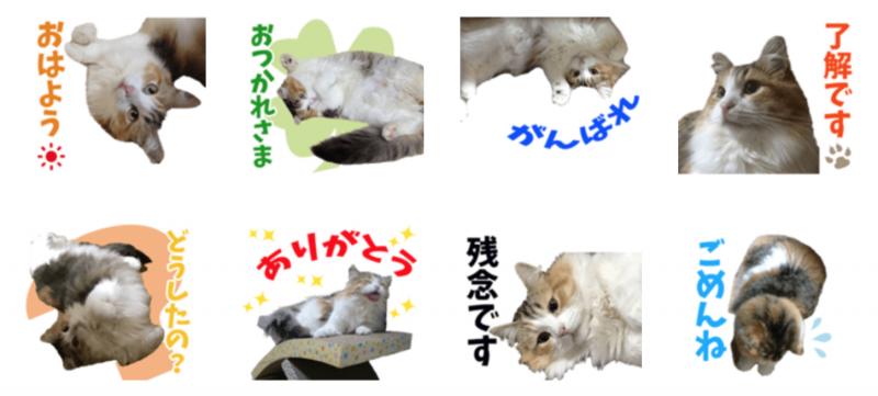 ぎんちゃんのオリジナルLINEスタンプ制作