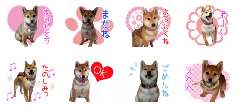 柴犬まるこちゃんのオリジナルLINEスタンプ制作
