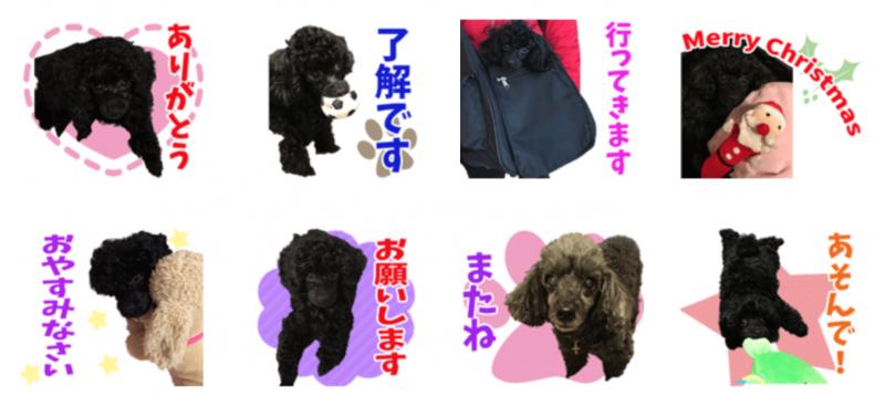 黒プードル犬アンジュちゃんのオリジナルLINEスタンプ制作