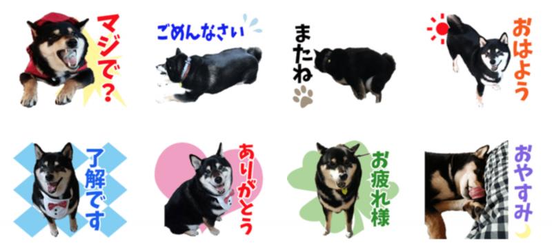 黒柴犬CHOPPERちゃんのオリジナルLINEスタンプ制作